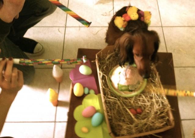 Lenny, 2 anni