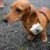 Fai foto da cani?