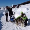 FAI IL FAGOTTINO E VAI!!! 10° Alaskan Malamute Sleddog Day