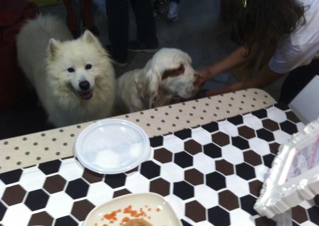 Cucina Molecolare per Cani? YES, Kiki Can!