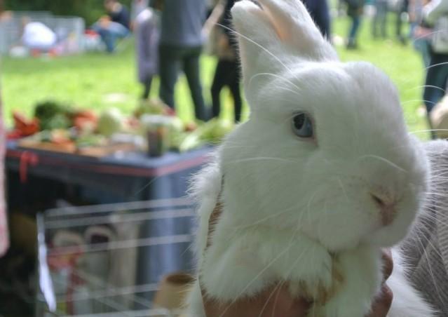 Bunny Salad Bar®, il primo take away per conigli è arrivato!