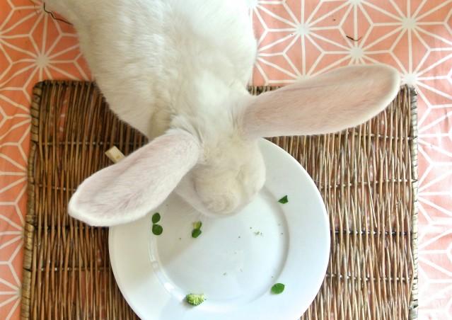 """Ricetta per conigli """"GIOCHI A TRIS?"""""""
