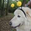 ZUCCA BURGER & MOSTRONE POLENTONE – Ricette di halloween per cani!