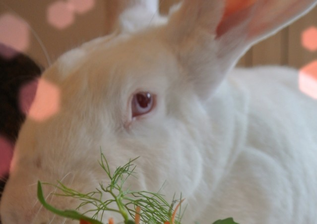 RAWoltini per conigli