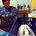 Arachide e la sua veterinaria