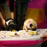 cani cibo1
