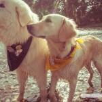 dogsavethequeen011