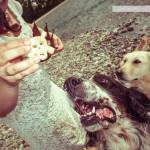dogsavethequeen012